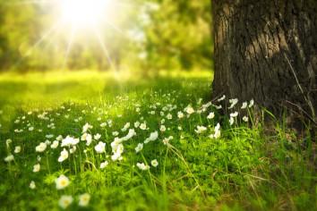 Het is altijd lente in de ogen van...