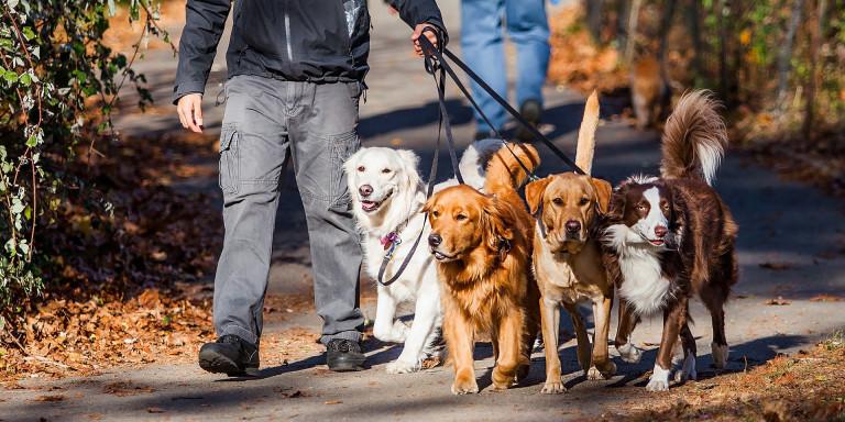 Hondenuitlaatservice - HUS Parkstad